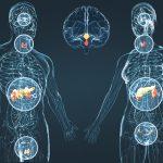 Потеря веса и эндокринная система